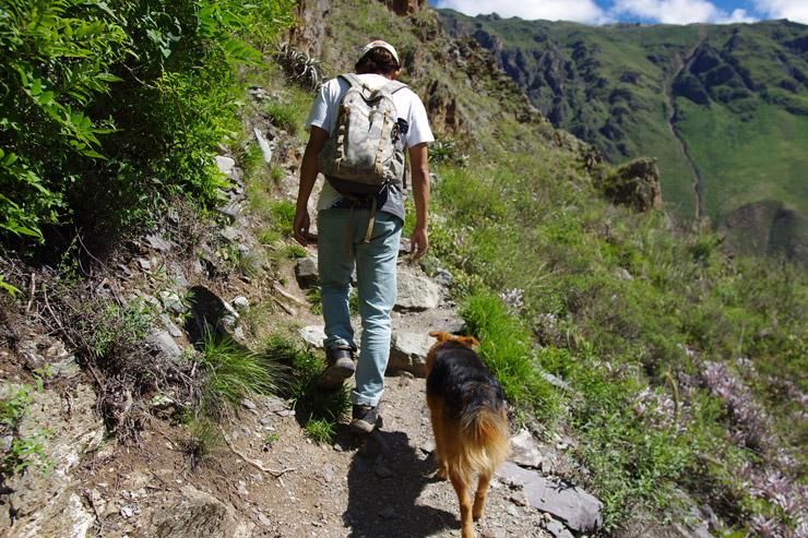 犬と山を登る