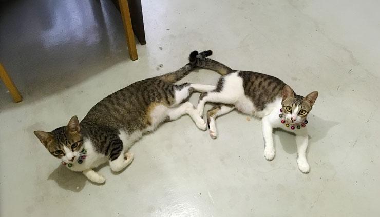 猫の出産に初めて立ち会った