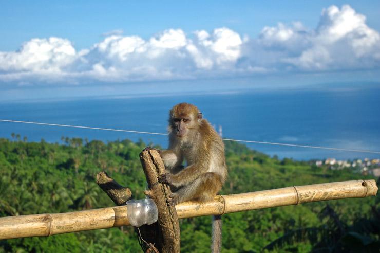 プエルトガレラにいた猿