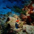 プエルトガレラのサバンでダイビング