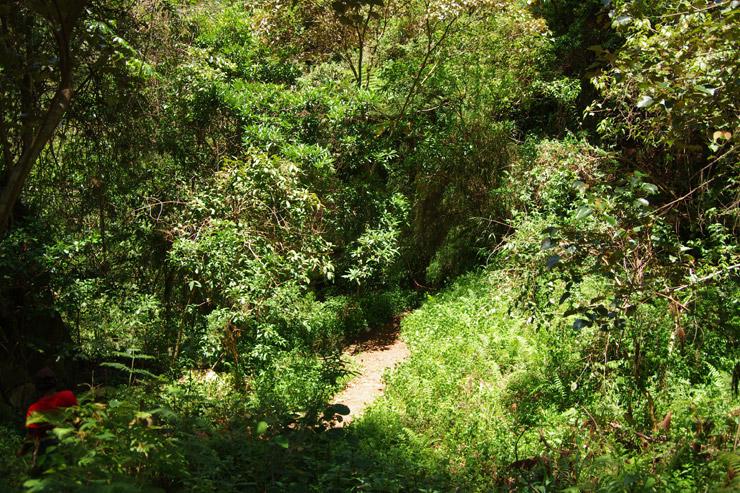 サガダのジャングル