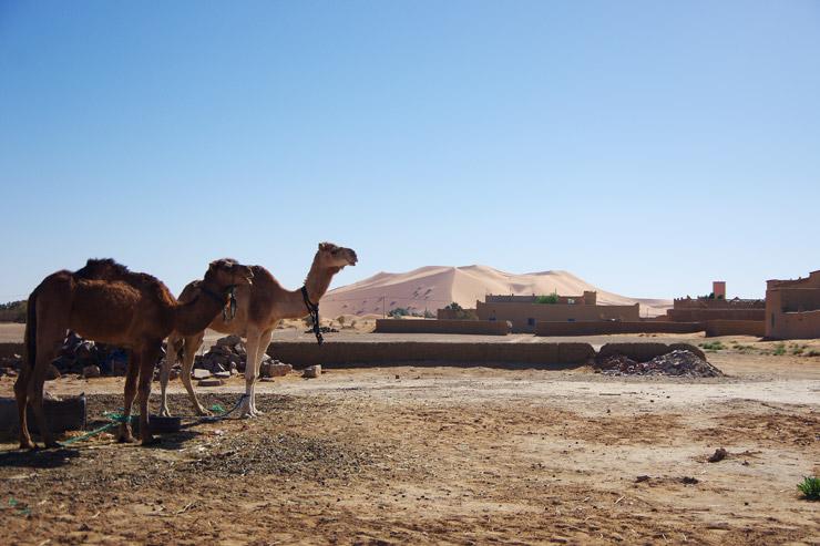 世界最大の砂漠、サハラ砂漠