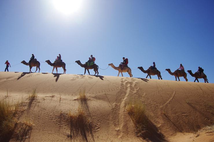 サハラ砂漠をラクダで行く
