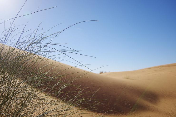 本物の砂漠