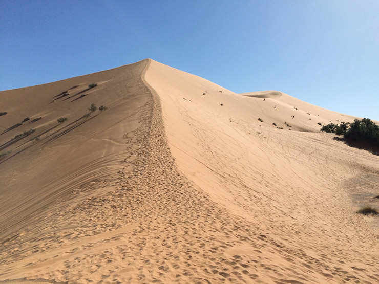 サハラ砂漠の旅 | モロッコ、メルズーガ