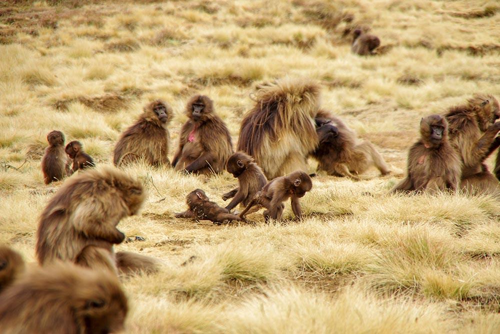 エチオピアの天井と言われる世界遺産『シミエン国立公園』