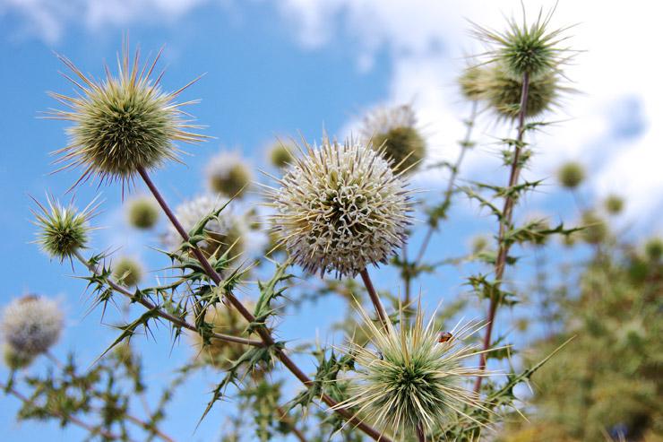 アフリカの植物