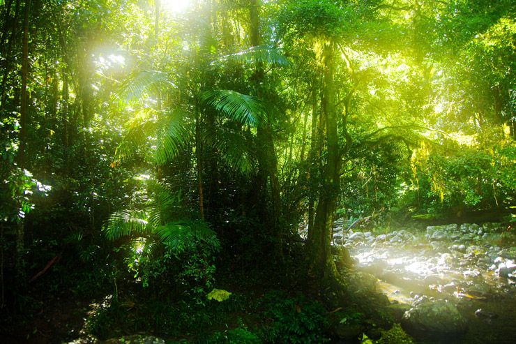 世界遺産『オーストラリアのゴンドワナ雨林』