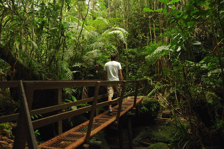 Colo-I-Suva Forest Park