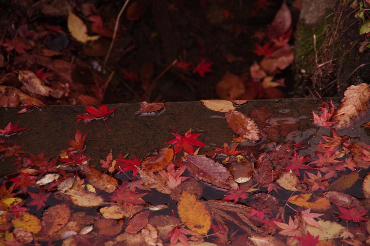 平泉の紅葉