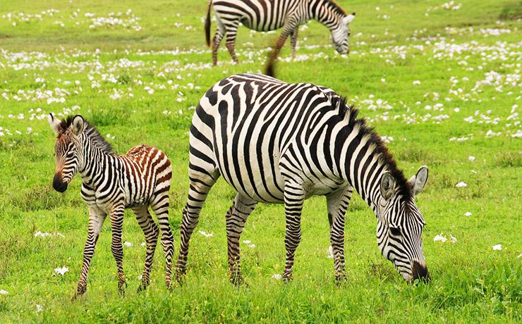 タンザニアの世界遺産、一覧