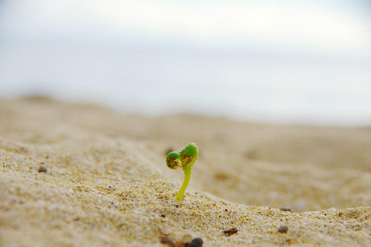 タベウニの砂浜