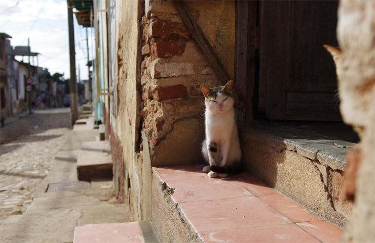 キューバのネコ