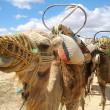 チュニジアの世界遺産、一覧