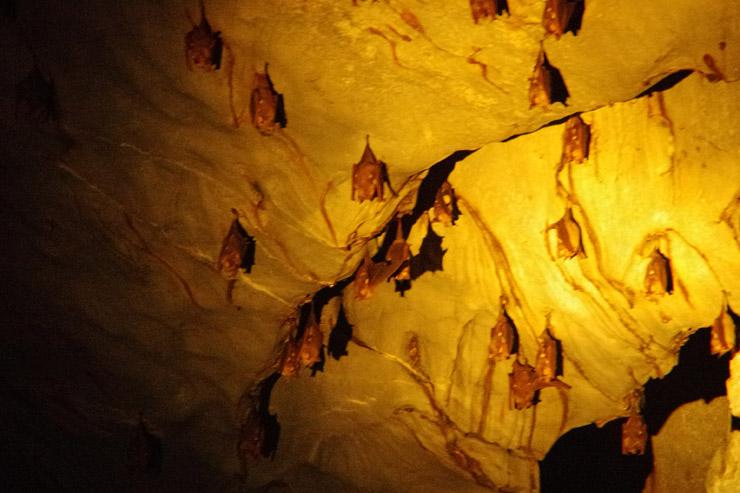 洞窟内のコウモリ達