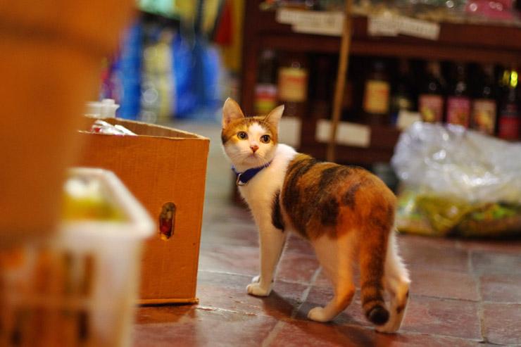 ビガンに居た猫