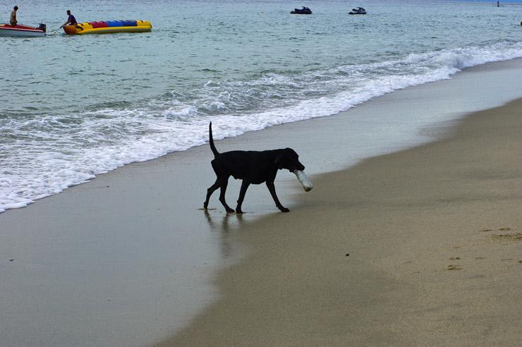 ホワイトビーチの犬