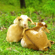 フィリピン人の生活と家畜と常識