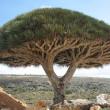 イエメンの世界遺産、一覧